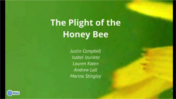 The plight of the honey bee